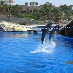 Aqualand dolphin show