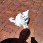 Clyde The Watson House's outside cat!