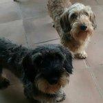 Pipo y Teo