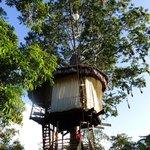 Treehouse views