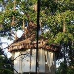 Treehouse lodges