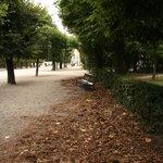 Fjolårets löv multnar på gångarna