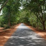 The Road to Auroville