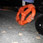 CHEWED UP DOG TOY UNDER THE BED?!
