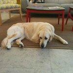 Samba - Delphine's dog