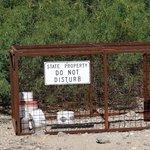 Traps to catch wild pigs
