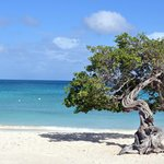 hermoso eagle beach