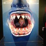 я-в акуле