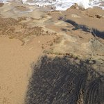 partial black sand beach right at the base of the pasture at Hector's
