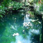 Beautiful cenote in the hotel property