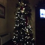 tree in our room