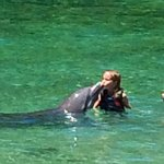 Kissing a dolphin