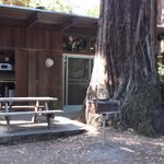 Our own Redwood tree on the patio.
