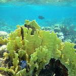 The Beautiful Barrier Reef