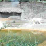 Polar bear :)