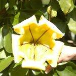 Une autre fleur, jaune