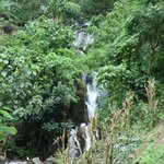 Forest walk - Water Fall enroute