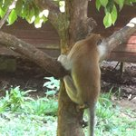 Monkey near the house