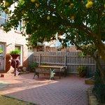 Lemon tree lined courtyard