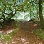 The Nature Trail - what flora and fauna can you spot on the walks around Inverawe