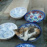 Cat sleeping in a bowl
