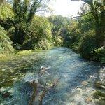 Stream flowing past fallen tree trunk