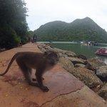 Met some monkeys on an island
