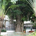 magnifique arbre