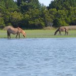 Horses from the boat