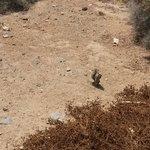 Eccoli i famosi scoiattoli: dalla passerella sopraelevata che vi porta in spiaggia li incontrere