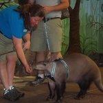 "Animal ""show"" in children's zoo"