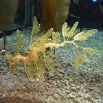 a creapy sea horse