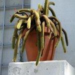 Many varieties of cactus