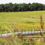 Longwood Garden Meadow
