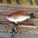 Fabulous crappie fishing from our dock!