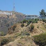 Hollywood vista