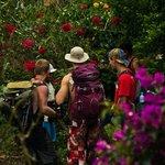 Flora Inca Jungle