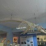 Marinhos da Fe Natural Sciences University Museum