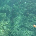 Underwater shot of flora and fauna in the Bay of Villefranche