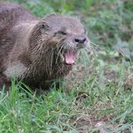 Dartmoor Otter Sanctuary