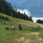 bear tour