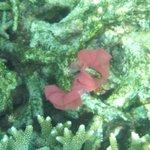 Some weird sea creature. lol