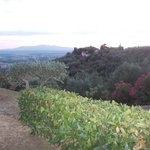 Foto de Villa di Papiano