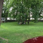 Grass yard view.