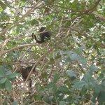 floresta de macacos