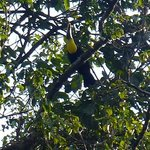 a toucan in the trees by the  pool