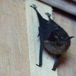 small bat on wall near bar !