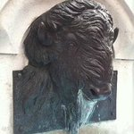 Bison with water fountain