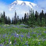 Spectacular in wildflower season.
