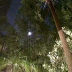 Moonlight through the palms by the pool